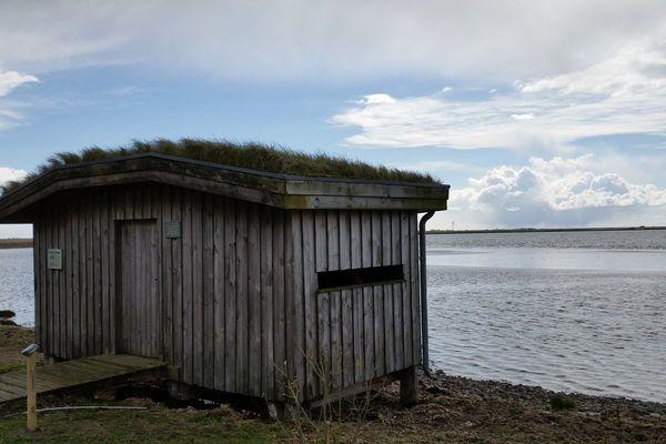 Vogelhütte im Beltringharder Koog