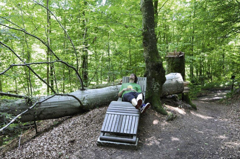 Naturerlebnispfad am Staffelbach bei Hauzenberg