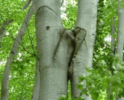 Baum-Natur-KraftSeminar