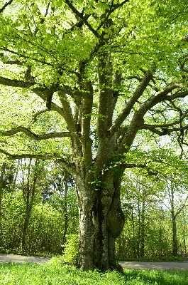 Baum-Natur-KraftSeminar - Bild 2