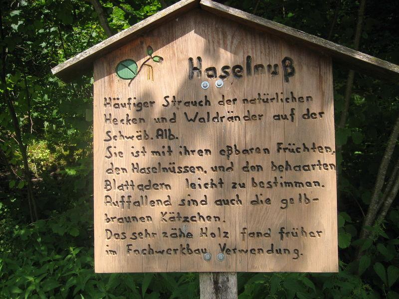 Waldlehrpfad - Bild 1