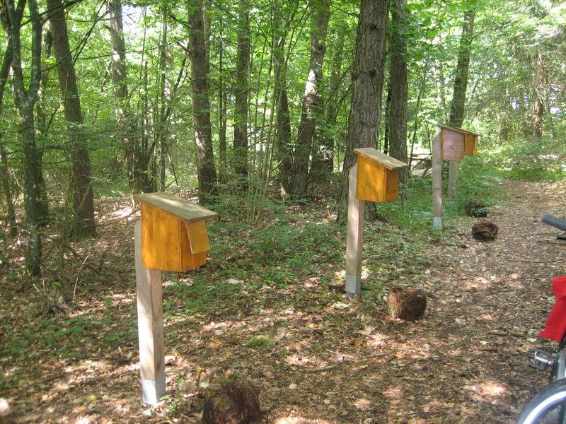 Wald-Erlebnis-Pfad Indelhausen  - Bild 2