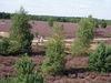 Findlingspark Henzendorf, Foto: Besucherinformation Neuzelle