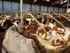 Interessante Infos rund ums Melken gibt es bei Hofführungen