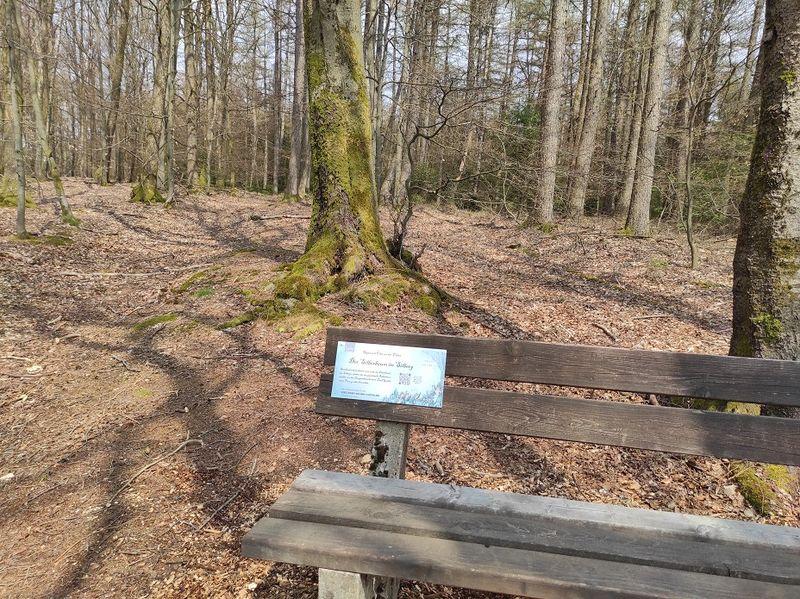 Die Bank im Buchenwald auf dem Silberg