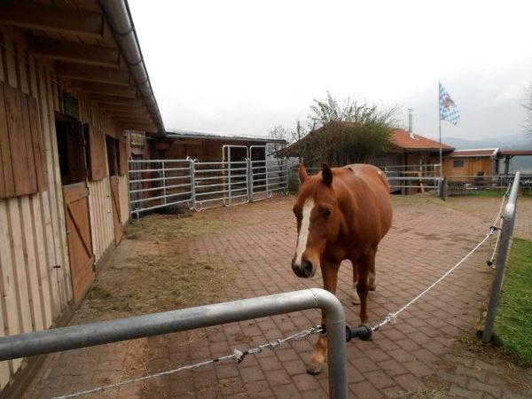 Pferd auf dem Feriengut Bauer in Sonndorf bei Hinterschmiding