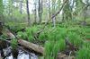 Sumpf im Torfmoor zwischen Sonndorf und Linden bei Hinterschmiding