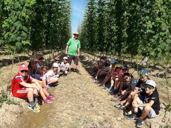 Führung einer Schulklasse durch den Hopfengarten