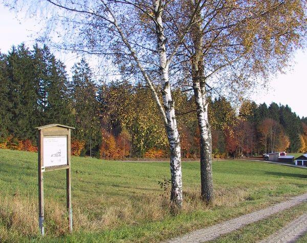Birken am landwirtschaftlichen Lehrpfad in Schönbrunn am Lusen