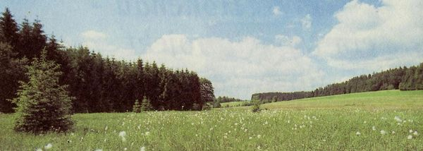Moorwiesen im Naturschutzgebiet Moorwald bei Kirchl-Wolfau
