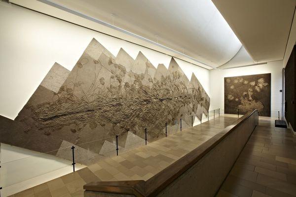 Die weltweit größte Kolonie von Seelilien im Urweltmuseum Hauff in Holzmaden