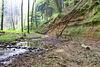 Wildromantischer Pfänderbach in Homburg-Einöd