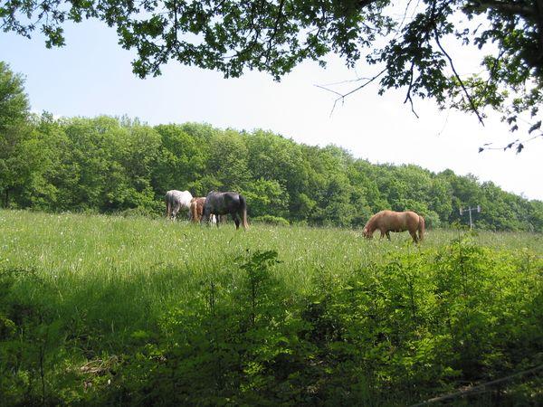 Pferde auf der Koppel beim RSG Berghof Einöd