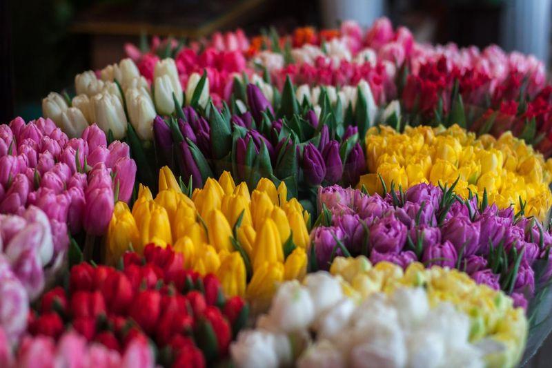 Bunter Blumengruß