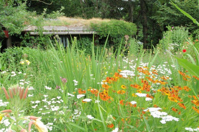 Der sommerliche BUND-Garten Husum
