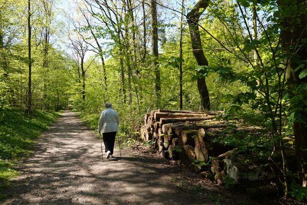 Spazierengehen in Husums grüner Lunge
