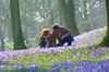 Pärchen inmitten der Husumer Krokusblüte im Schlosspark