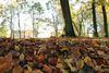 Herbstlaub im Husumer Schlosspark