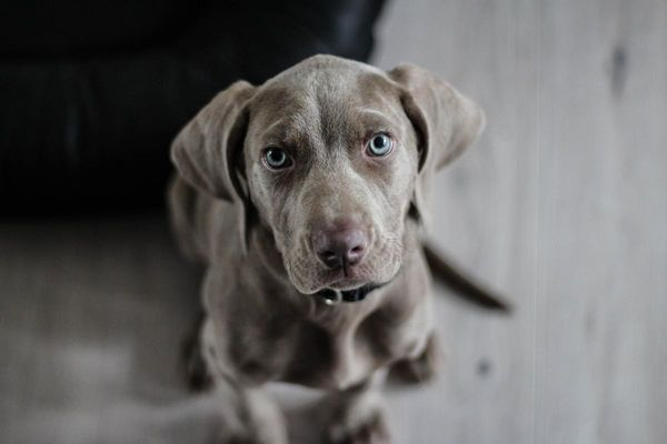 Hund (Symbolbild)