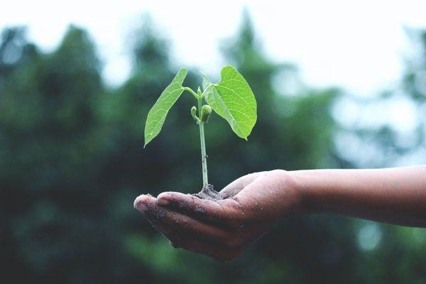 Ziel: Nachhaltigkeit