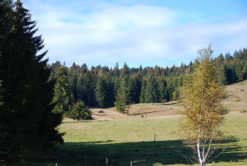 Nature Reserve Kohlhutte Lampenschweine Ibach Blackforest Tourism