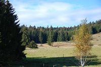 Naturschutzgebiet Kohlhütte-Lampenschweine bei Oberibach