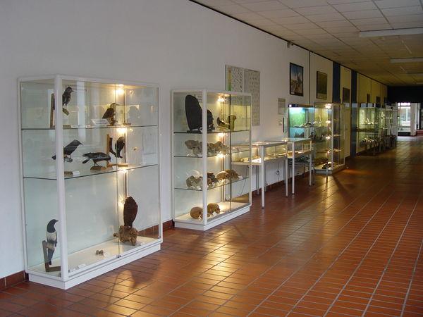 Museum Hemberg