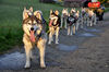 Husky-Fahrten auf der Ost-Alb einmal selbst erleben