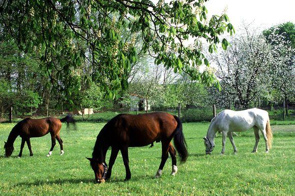 Pferde, Foto: TV Seenland Oder-Spree e.V.