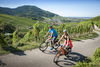 vineyard and cyclists