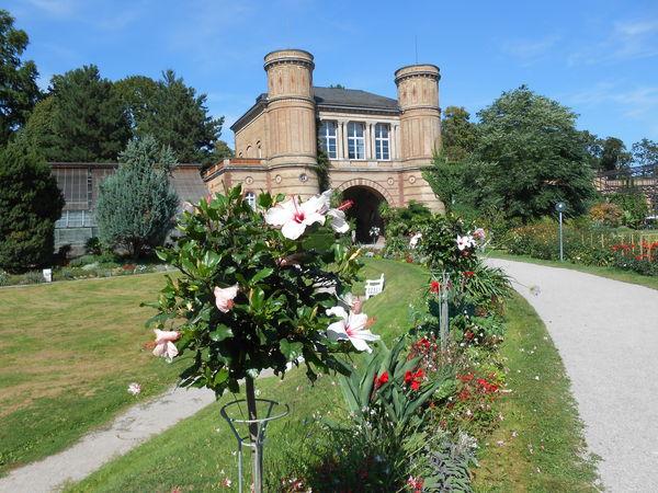 Botanischer Garten rosa Blumen