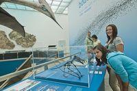 Naturkundemuseum Karlsruhe, Ausstellung