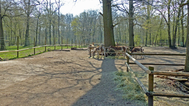 tierpark oberwald urlaubsland baden w rttemberg. Black Bedroom Furniture Sets. Home Design Ideas