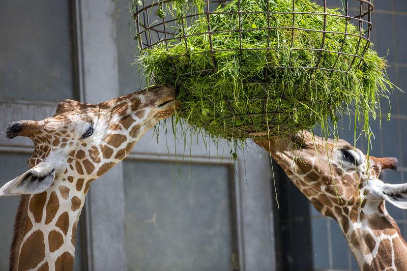 öffnungszeiten Karlsruher Zoo