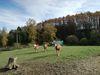 Auch größere Pferde gibt auf dem Gelände des Ponyhofs