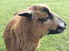 Auch andere tierische Bewohner leben auf dem Hof
