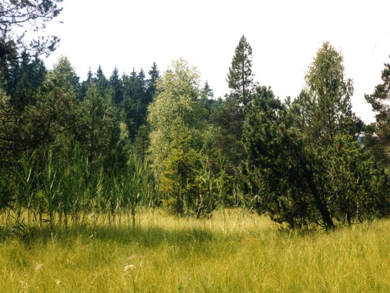 Moorlandschaft im Naturschutzgebiet Todtenau und umgebende Auen