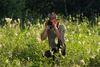 Ranger im Schwarzbachtal