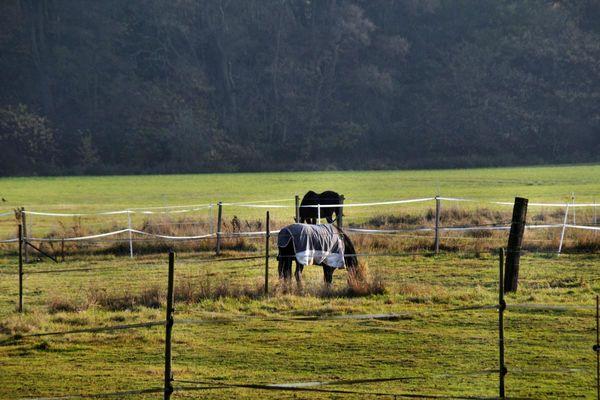 Pferd aus Wiese