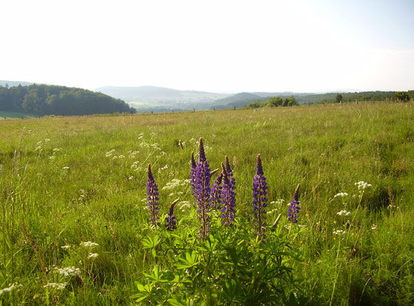 Premiumwandelroute 'Lochbachpfad' - kloof en bloemenweiden