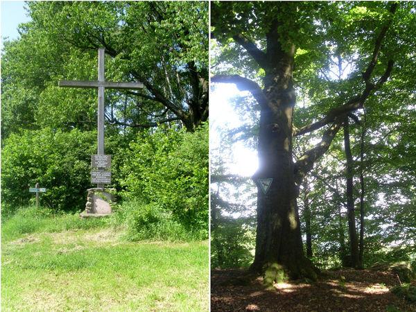 Gipfelkreuz (links) und Baumriese (rechts) auf dem Gallner, dem Hausberg von Konzell