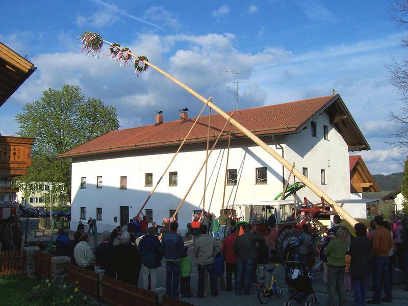 Traditionelles Maibaum-Aufstellen in Konzell im Bayerischen Wald