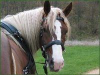 Pferd Mogli