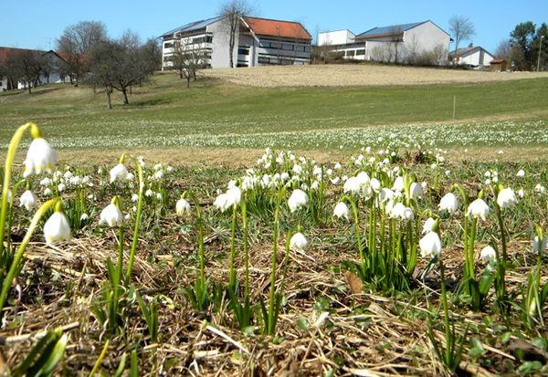 Blick auf die Schneeglöckerlwiese in Lalling im Bayerischen Wald