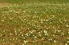 Tausende von Schneeglöckchen blühen in Lalling im Bayerischen Wald