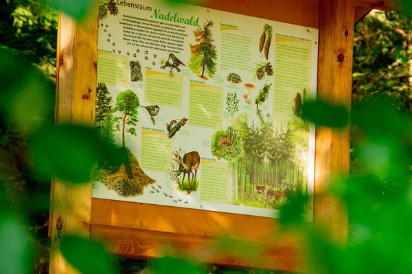 Die einzelnen Tafeln geben anschauliche Informationen zum Lebensraum Wald