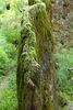Ein Felsen der wächst - mitten in Niederbayern