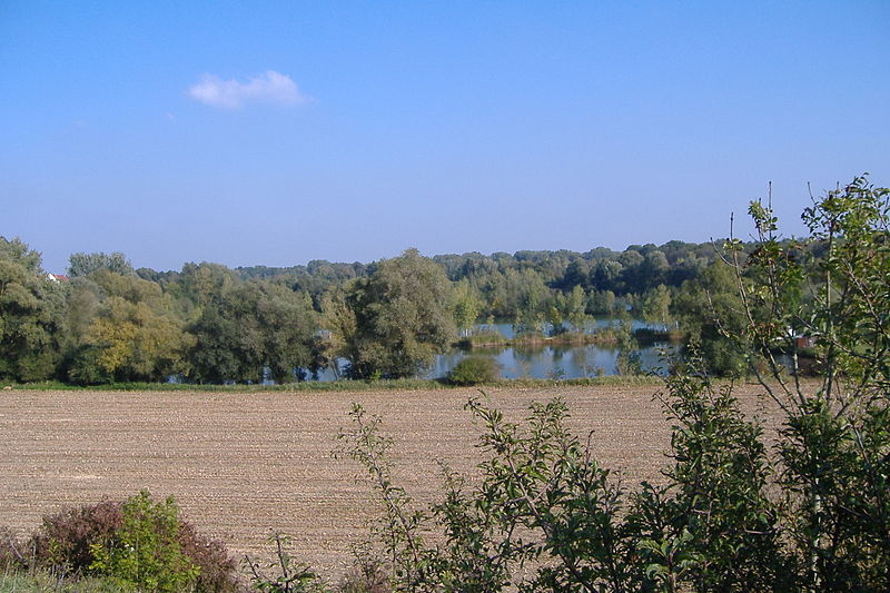 Donauried