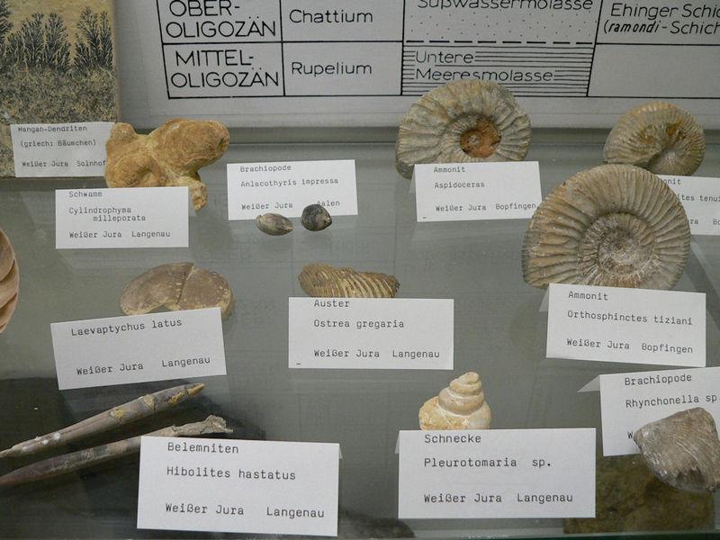 Museum für Vor- und Frühgeschichte in Langenau