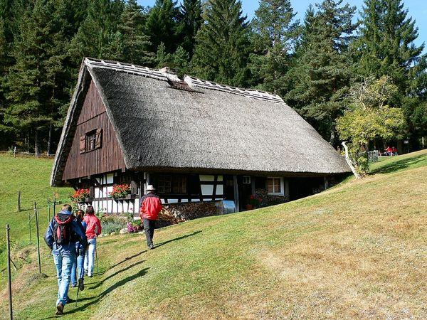 Eine Wandergruppe auf dem Weg zum Kapfhäusle, einem Schwarzwaldhaus mit Reetdach.